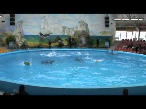 Дельфинарий Ереван