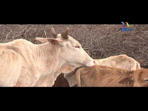 Oloitokitok herders slam auction of their animals by Tanzania government