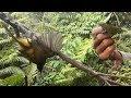 Pikat Semua Jenis Burung Kecil Mantap Suara Sue Channel Ampuh Dan Jitu  Mp3 - Mp4 Download