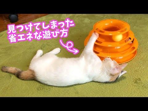 ダルそうにおもちゃで遊ぶ子猫+おまけ