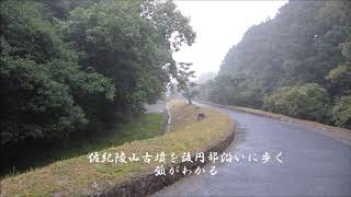 佐紀陵山古墳 2(佐紀古墳群)中期 奈良県 Sakimisasagiyama Tumulus 2(Nara Pref.)