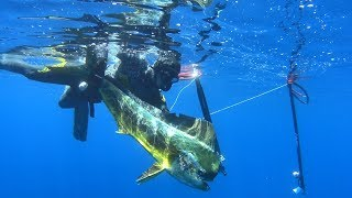 spearfishing adventures #23: Huge Dolphinfish – The gifts of the Aegean Sea
