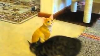 Kitten fights statue