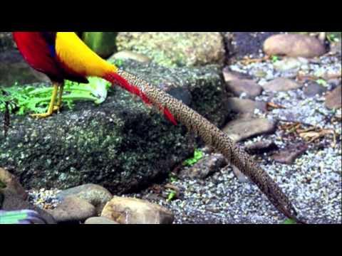 The Exotic Birds Aviary