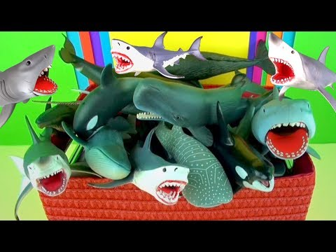 Learn Sea Animals Names Sharks Whales Dolphins - Jaws - Kids Educational Toys - in English