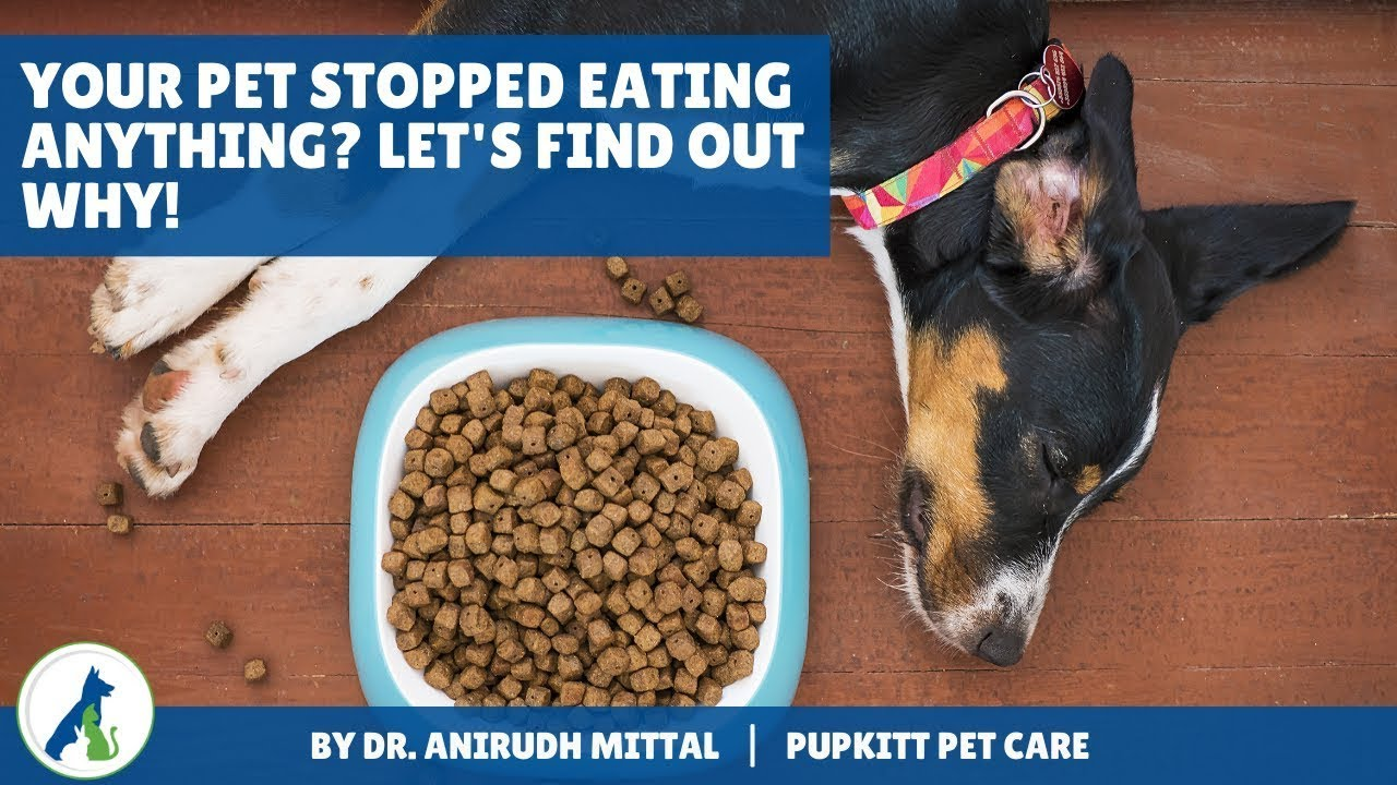Your dog is not eating anything? Let's find out why