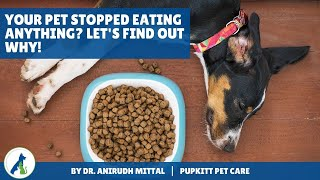 Your dog is not eating anything? Let's find out why | Loss of appetite in Dogs | Pupkitt Pet Care