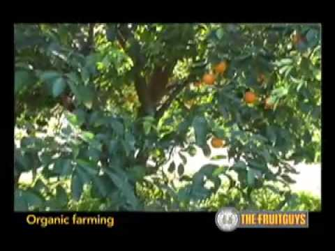 Producing Organic Crops: Removing Insects and Weed Naturally