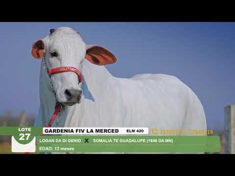 Lote 27 Gardenia FIV La Merced