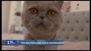 Cea mai populara pisica din Moldova - Mya 😽