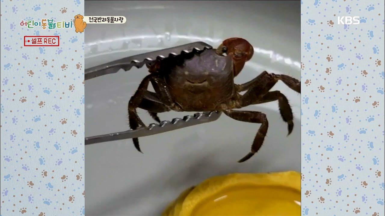 [전국반려동물자랑] 오늘 자랑할 친구는 누구일까?? [어린이 동물티비]   KBS 210908 방송