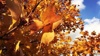 間違えたりしてますが…(´・∀・`) 秋ですな!!!!!ずっと紅葉ですみ...