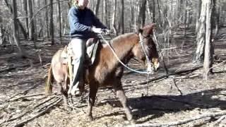 Pop Tart pony mule for sale