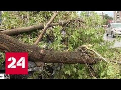 Град размером с горошину уничтожил урожай, повредил линии электропередач и повалил деревья - Росси…