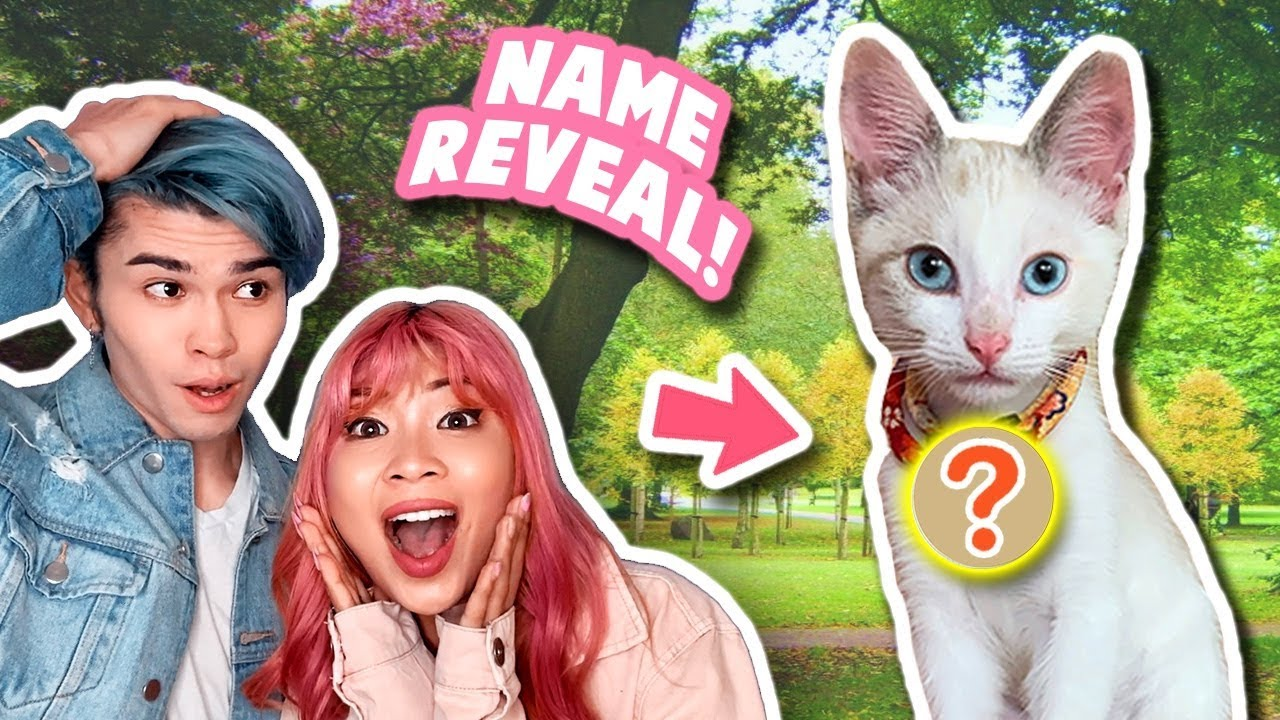 Download WHAT DID WE NAME HER? *our kitten's name revealed!*