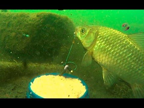 """Ловил на """"Пробку"""" с Подводными съемками. рыбалка онлайн. Ловля карася. fishing"""