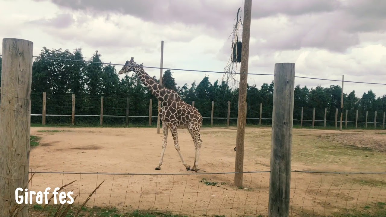 Fun Family Day Trip at Twycross Zoo, In the heart of