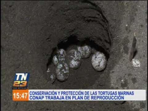 conap-trabaja-en-la-protección-de-las-tortugas-marinas