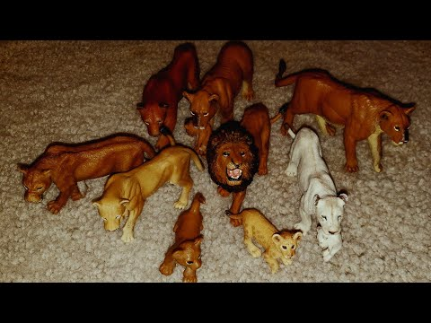 My Lion Collection!