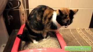 Кот Какает (Симулятор Кота)