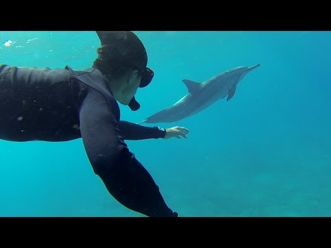 GoPro: Swimming With Dolphins