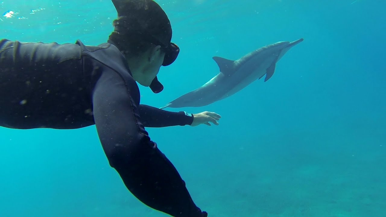 Gopro Swimming With Dolphins Youtube