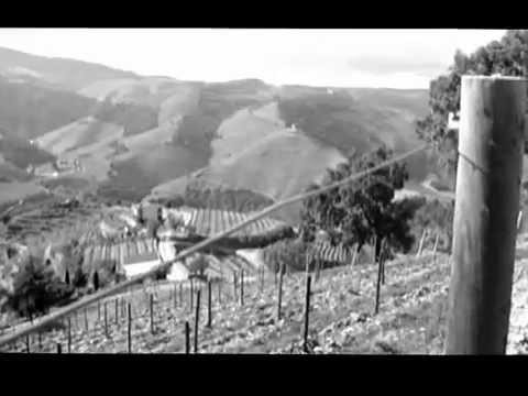 ALIJÓ | VALE DE MENDIZ (TERRA D`OURO!)