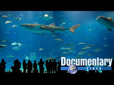Water World Aquarium documentary
