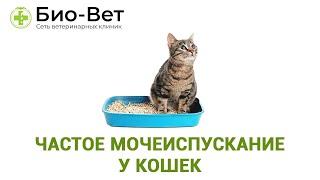 Частое мочеиспускание у кошек. Ветеринарная клиника Био-Вет.