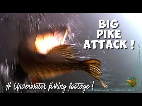 UNDERWATER VIDEO WITH CARPS & CATFISH from YouTube · Duration:  2 minutes 13 seconds
