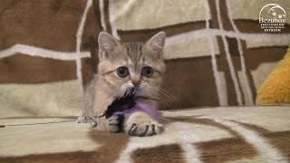 Котик-мнушка :) Лёня Безухов, 2,5 месяца
