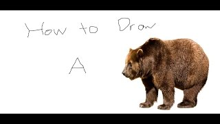 How To Draw: a Bear