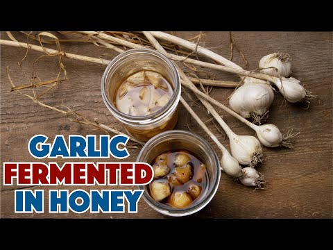 🔵 How To Make Garlic Fermented In Honey Recipe || Glen & Friends Cooking