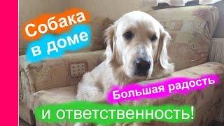 Собака в доме - большая радость и ответственность!