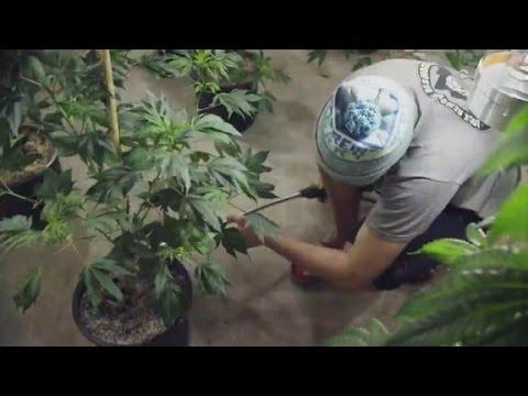 Meet Breckenridge's 'weed genius'