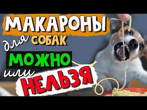 Вопрос: Можно ли давать собакам индейку?