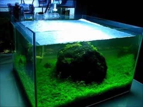 einfach kahmhaut aus aquarium entfernen. Black Bedroom Furniture Sets. Home Design Ideas