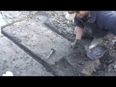 Charmouth Ichthyosaur Find Boxing Day 2013