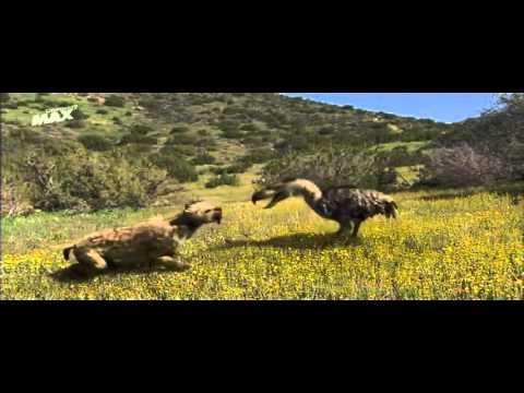Ave del terror vs Smilodon