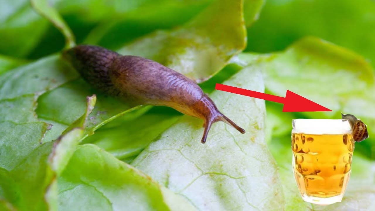 6 Tricks To Wipe Out Snails And Slugs In Your Garden Naturally