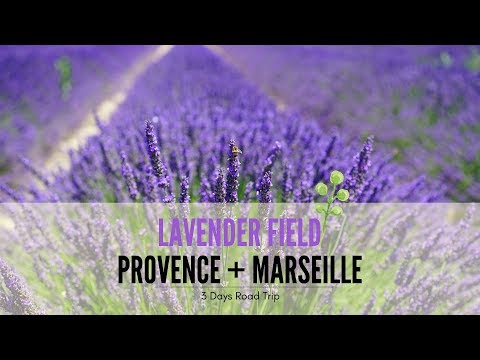 Trip to Mont Ventoux, Lavender Sault, France - 2017 [HD]
