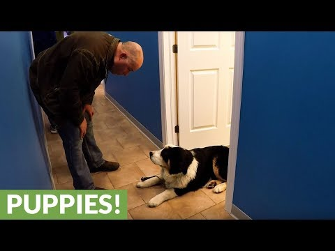Puppy stubbornly refuses to leave vet's office