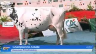 Eurogénétique 2015 - Prim'Holstein - Championne Adulte