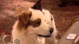 Собака точка ком   1 сезон, 5 5 серия