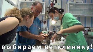 видео Ветеринар в Звенигороде. Ветеринарные услуги в Звенигороде