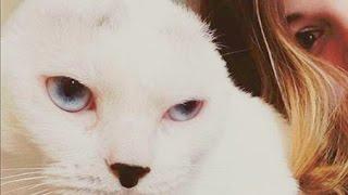 重度の不安障害を抱えた女性 耳のない猫と出会い、お互い支え合う関係に...