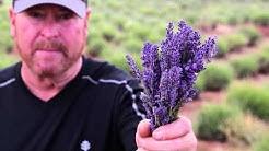 Red Rock Farms Lavender Festival