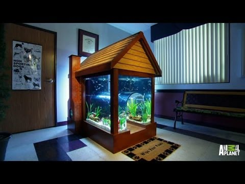 Reveal gone to the dogs tanked youtube for Fish tank house