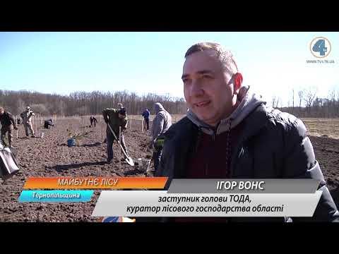 TV-4: Європейські та корейські кедри висадили у Збаразькому лісництві