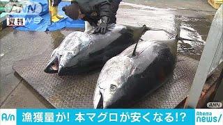 クロマグロの量が回復傾向 漁獲枠拡大の可能性も(18/05/21)